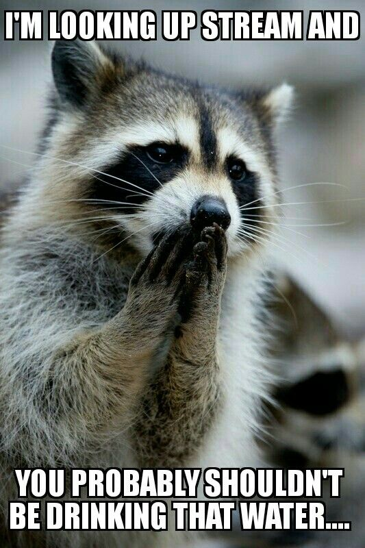 59b971d1156794ba0f64d34d85ed39eb a kiss wild animals 28 best memes by me! images on pinterest wild animals, fluffy