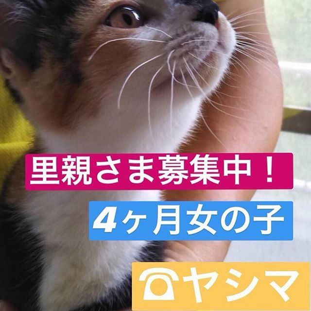 Repost Save Dogs Cats Japan Repost Repost Save Dogs Cats Japan Repost Rina Gio 4ヶ月里親さま募集中 手先が白色で靴下を履いてるような模様の可愛い女の子です里親さま大募集中です完全 Dog Cat Cats Dogs