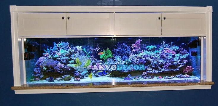 Pusat Perlengkapan Aquarium Air Laut di Tangerang