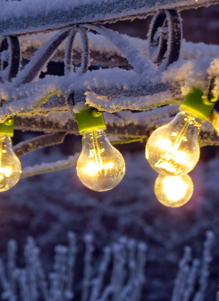 Circus lights in frozen garden