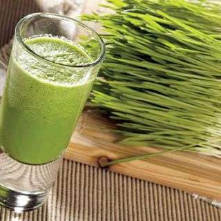 Wheatgrass seeds sprout in just 7 days, yielding grass for juicing and nutritional use.