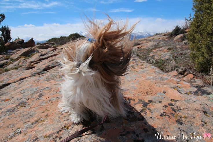 Just a little bit windy up here!