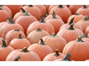 Nothing says October quite like a day of pumpkin picking - get the scoop on all of the best pumpkin patches here on LI right here!