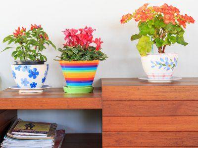 Es recomendable tener plantas en los diferentes lugares de tu casa, pero a cada habitación le corresponde una planta diferente de acuerdo a las características de las mismas. Además de decorar nos pueden ayudar a problemas de salud.