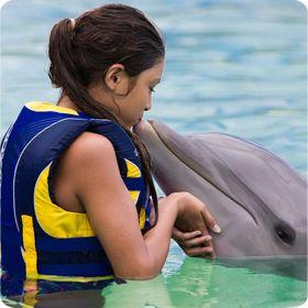 Dolphin Encounter - Educational Activities on Oahu, Hawaii   Sea Life Park Hawaii