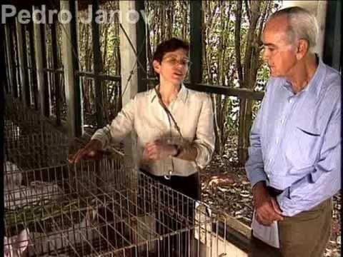 Globo Rural: como começar uma criação de coelhos - 11/1999 - YouTube