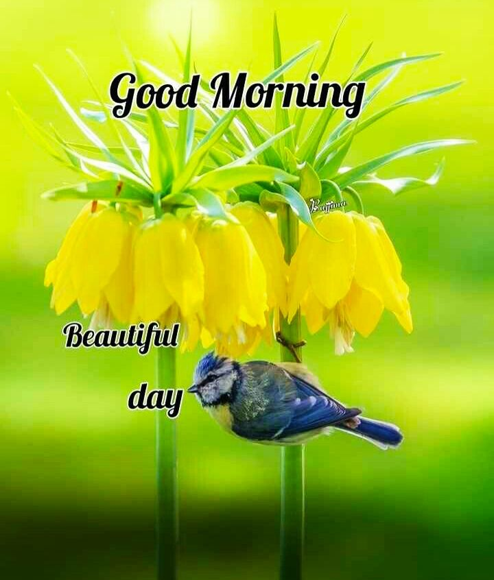 Good Morning Images For Whatsapp Free Download Hd Wallpaper Pictures Photos Of Good Morning Mi Good Morning Images Beautiful Morning Images Morning Images Good morning mobile wallpaper hd
