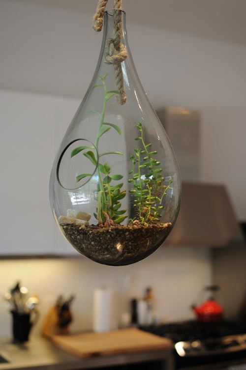 Glass planter from Stylegarage. - 60 Best Images About Glass Planters On Pinterest Mercury Glass