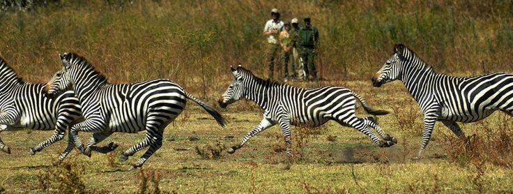 Magnificent wildlife