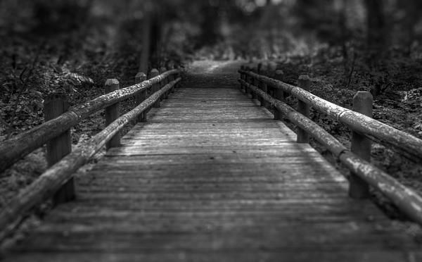This small wooden bridge is located in Lake Park on the east side of Milwaukee, along Lake Michigan.  www.scottnorrisphotography.com