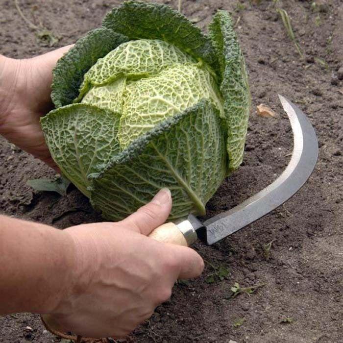 Long Handled Fruit Picker