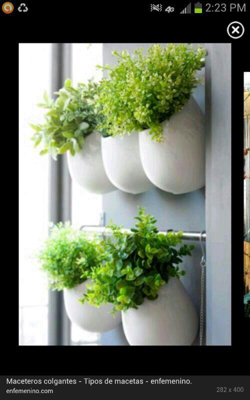 Reproduccion asexual de las plantas rizomas grips