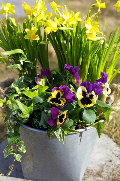 Fånga in påskens färger med blommor! | Blomsterlandet.se