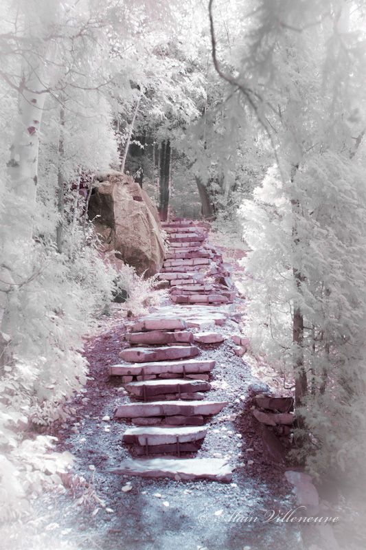I will never get sick of paths and stairways that look like they lead to a fairyland. <3