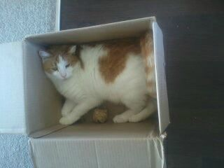 arny loves boxes
