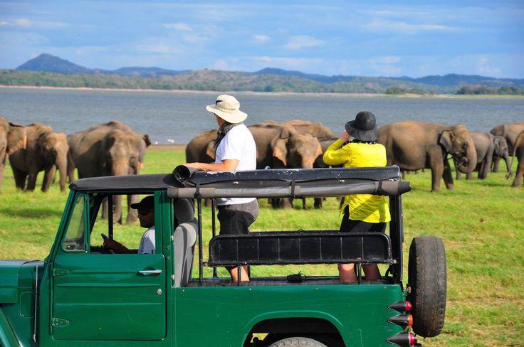Wildlife safari, Sri Lanka.