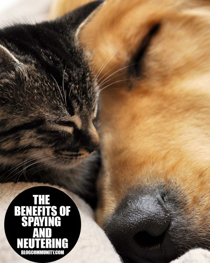 The Benefits of Spaying and Neutering Your Pets
