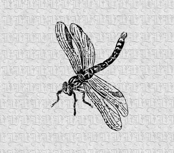 Dragonfly Vintage Clip Art Illustrations 300 by luminariumgraphics, $2.20
