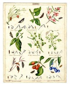 Geometridae and Pyralidae moth families