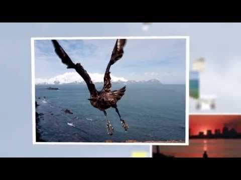 Promotional video for The European environment - state and outlook 2015 - YouTube.  My image is featured at 46 seconds in.