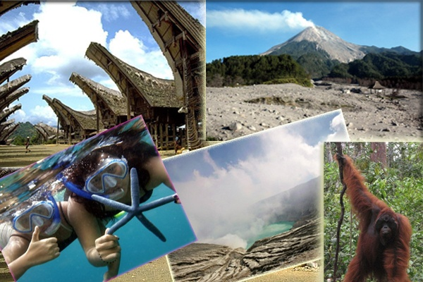 Indonesia Tour operator for mount Bromo Ijen , Yogyakarta. Wildlife and Diving