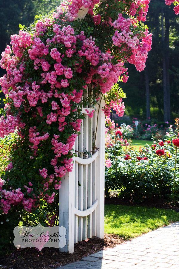 #Bella Rosa  Cottage gateway