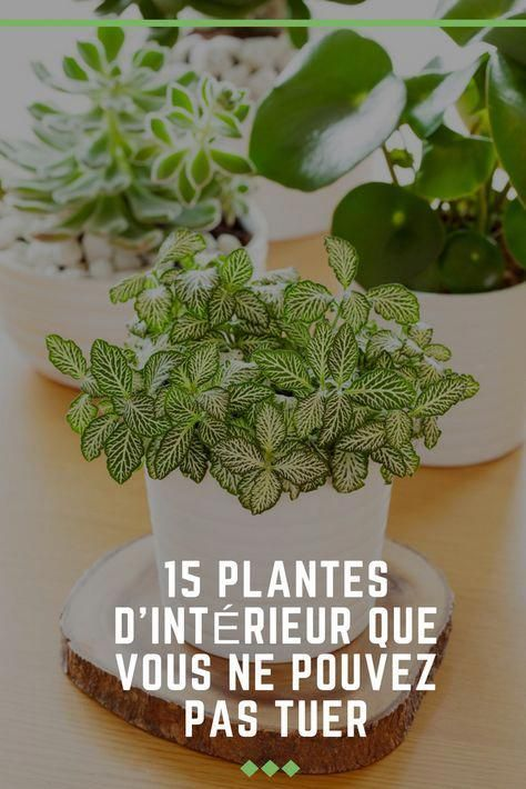 15 Plantes D Interieur Que Vous Ne Pouvez Pas Tuer Plantes