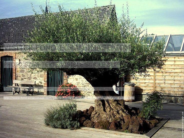 19 best olivier images on pinterest decks mediterranean garden and landscaping. Black Bedroom Furniture Sets. Home Design Ideas