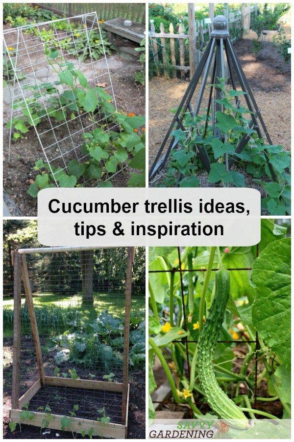 Cucumber Trellis Ideas Tips Inspiration For Vegetable Gardens Cucumber Trellis Vegetable Garden Trellis Cucumber Plant