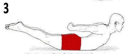 Phase active de l' exercice dos en extension sans matériel