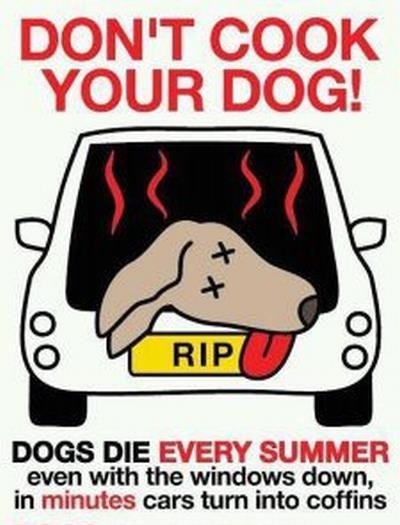 Not really a news article but a good reminder for the sake of pets; and for dingbats that leave their kids in the car too.  Hello!  Leave your pets at home and take your kids inside with you!Smart People, Dogs Day, Pets, Windows Clings, Hot Cars, Cooking, Leaves, Furries Friends, Animal