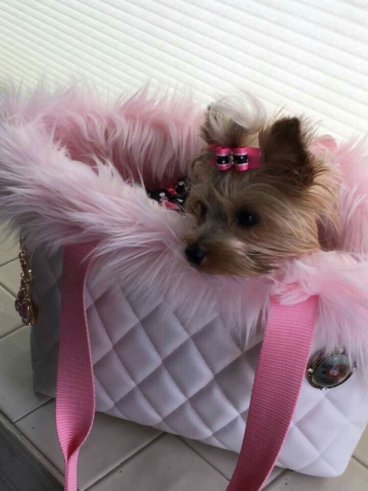 139 best Yorkie Resting images on Pinterest | Pet beds ...