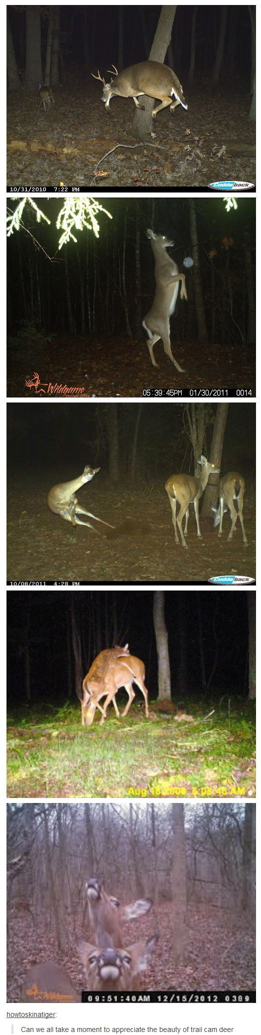 The antics of the trail cam deer.