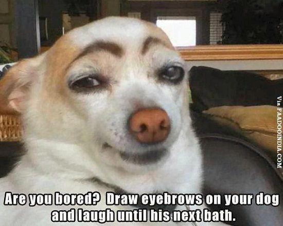 things to draw when your bored | Are You Bored Draw Eyebrows On Your Dog And Laugh Until His Next Bath ...