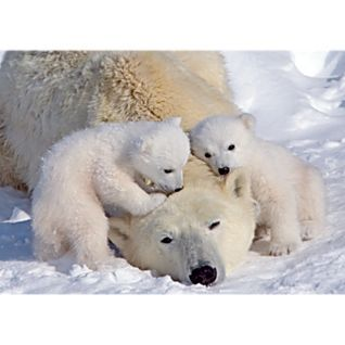 Awww, little polar bear cubs love their mamma