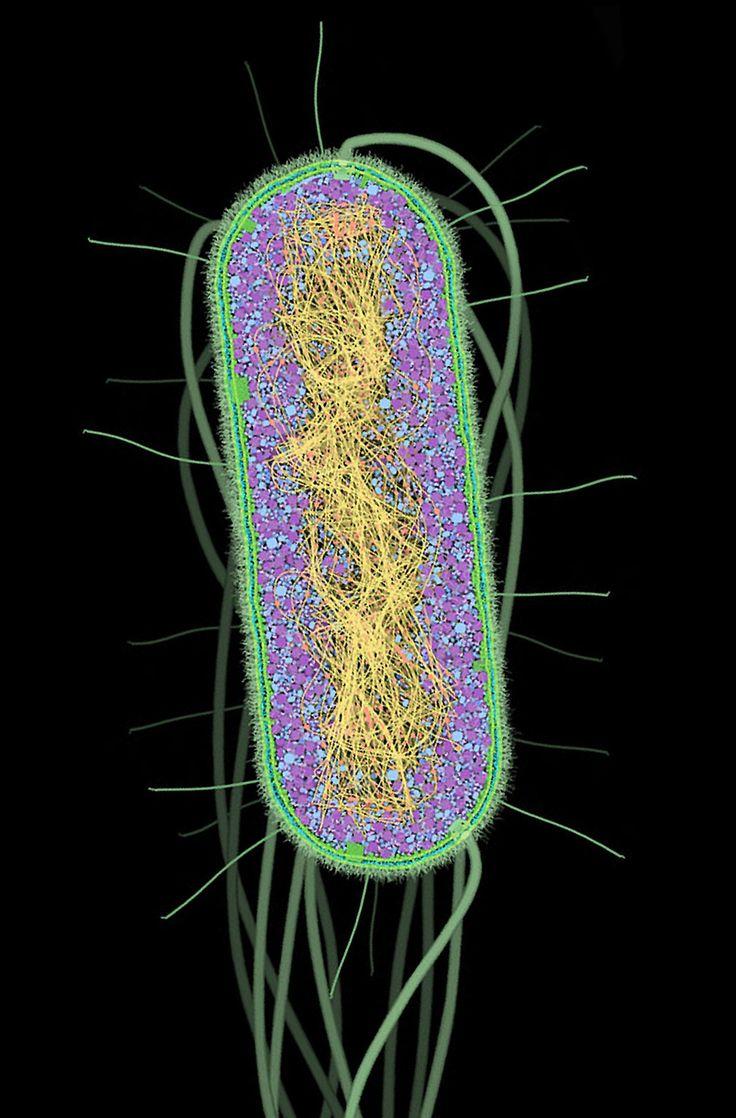 Molecular scale paintings of a bacterium by DAVID GOODSELL.