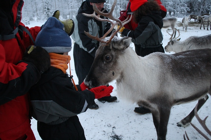 """Foto 23 - Navidad 2012 en Laponia - Familia Pesquera"" Viaje a Laponia | PapaNoelEnLaponia | Viaje a Laponia Papa Noel | Papa Noel Laponia | Viajar a Laponia"