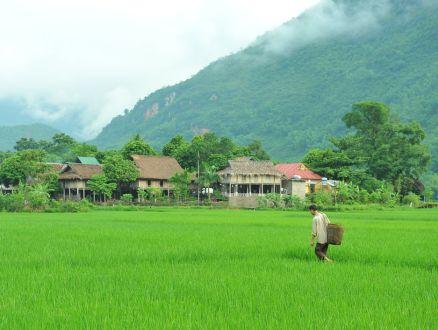 Le Vietnam révèle une nature époustouflante.