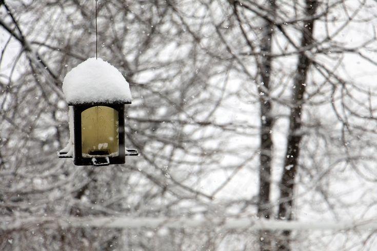 Zimowe, Żłób, Podajnik Ptaków, Ptak, Snow
