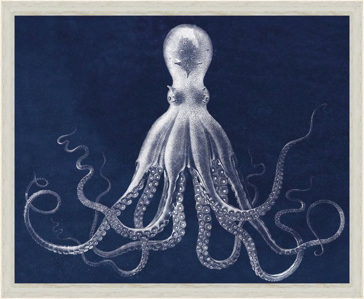 I love this octopus print originally published in 1826.