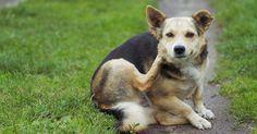 Remedio casero y natural contra las alergias de las mascotas