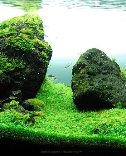 Aquarium Aquascape: 169 Best Aquascaping: Nano Aquariums Images On Pinterest