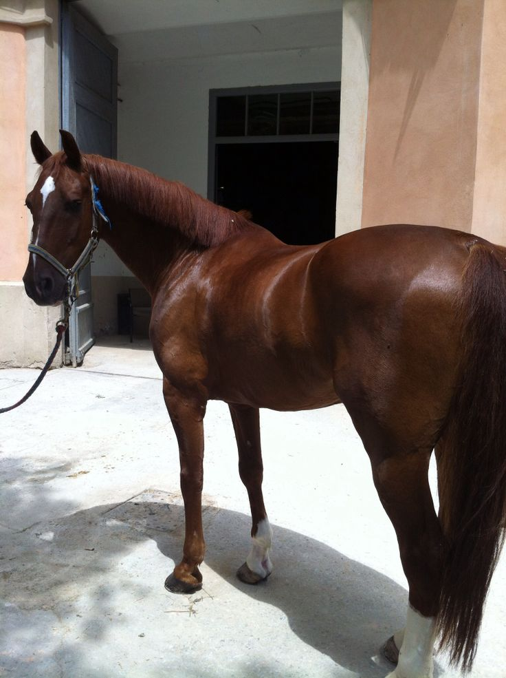 Mi caballo!!