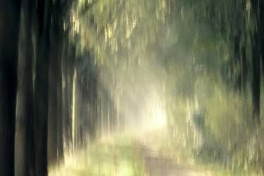 When the sun drips from the canopy - Limited Edition 1 of 4