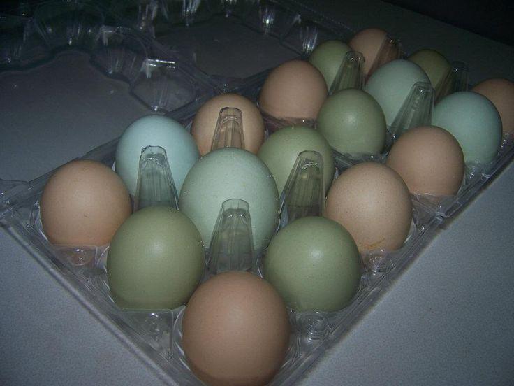 My beautiful backyard chicken eggs. =)