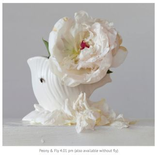 From series Imperfect 2012  Digital Photograph by Emma Bass.  Emma Bass is much in demand as a commercial photographer but her real love is art photography for herself, not a client. Her current series of Imperfect flower studies muses on the temporality of life. Floral art is not regarded seriously, but Bass makes an important statement by reminding us that flowers are not only beautiful to look at but also wilt, fade and die. These works show the subtle beauty of degeneration, with petals…
