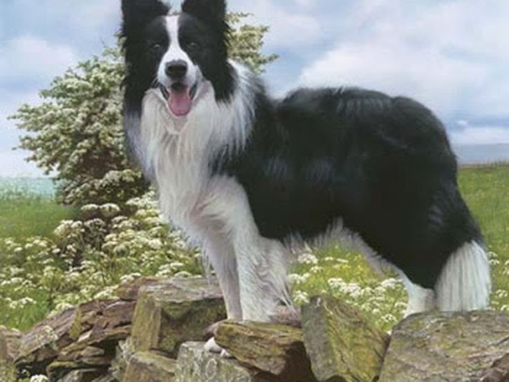 Las diez razas de perros mas inteligentes y peligrosas - Taringa!