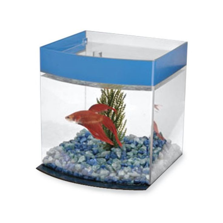25 best ideas about 1 gallon fish tank on pinterest 20 for Fish tank divider 5 gallon
