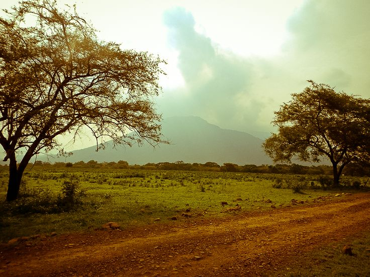 The mystery of Mount Baluran