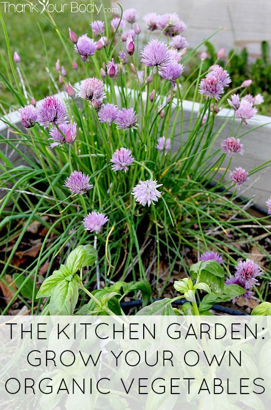 The Kitchen Garden! How to grow organic vegetables.
